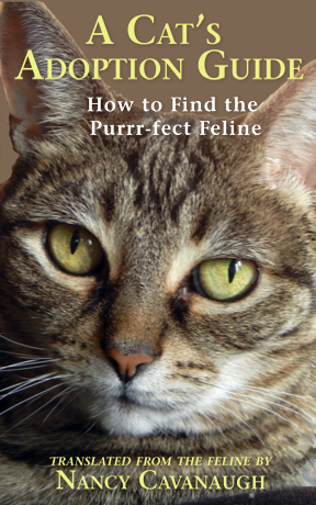 A Cat's Adoption Guide